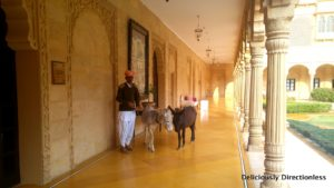 Donkeys at Suryagarh Jaisalmer