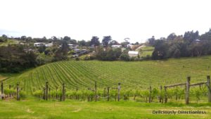 Vineyards on Waiheke Island Auckland