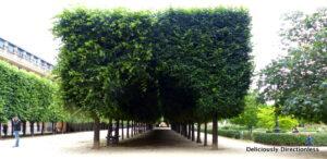 Jardin du Palais-Royal Paris